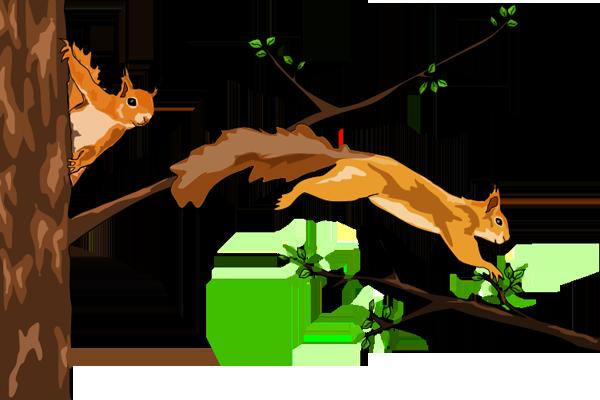 Veverky skáčou po stromě - O malém Veverčátku - Petra Pávková - Jana Kutová