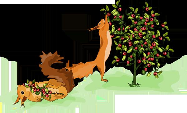 Veverky papají bobule - O malém Veverčátku - Petra Pávková - Jana Kutová