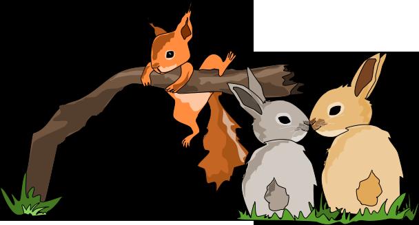 Veverčátko roste s králíky - O malém Veverčátku - Petra Pávková - Jana Kutová